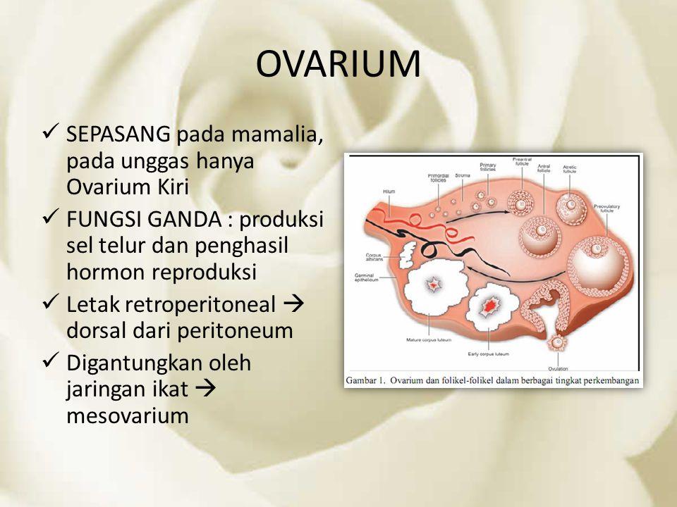 OVARIUM SEPASANG pada mamalia, pada unggas hanya Ovarium Kiri