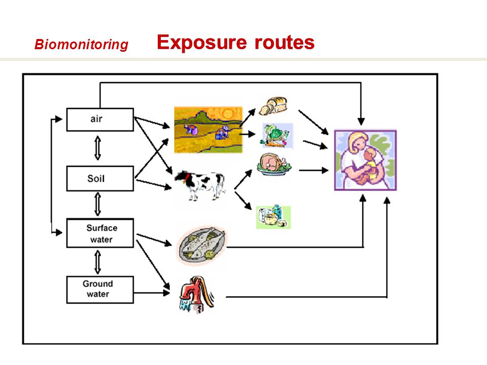 Biomonitoring Exposure routes 54 54