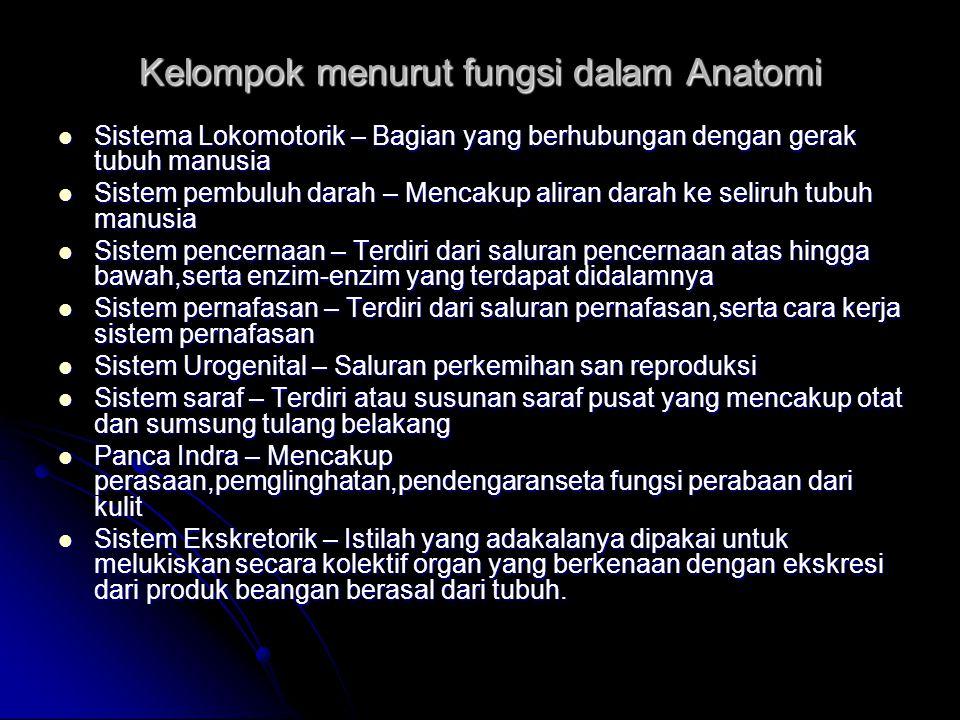 Kelompok menurut fungsi dalam Anatomi