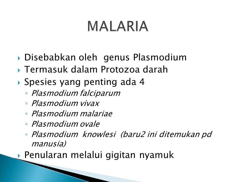 MALARIA Disebabkan oleh genus Plasmodium Termasuk dalam Protozoa darah