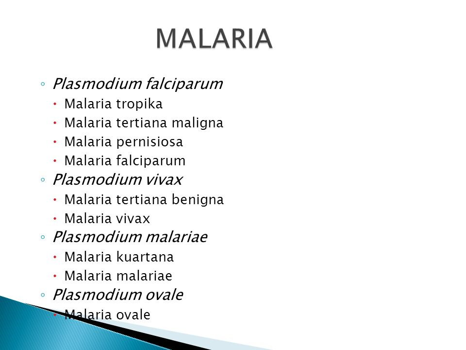 MALARIA Plasmodium falciparum Plasmodium vivax Plasmodium malariae