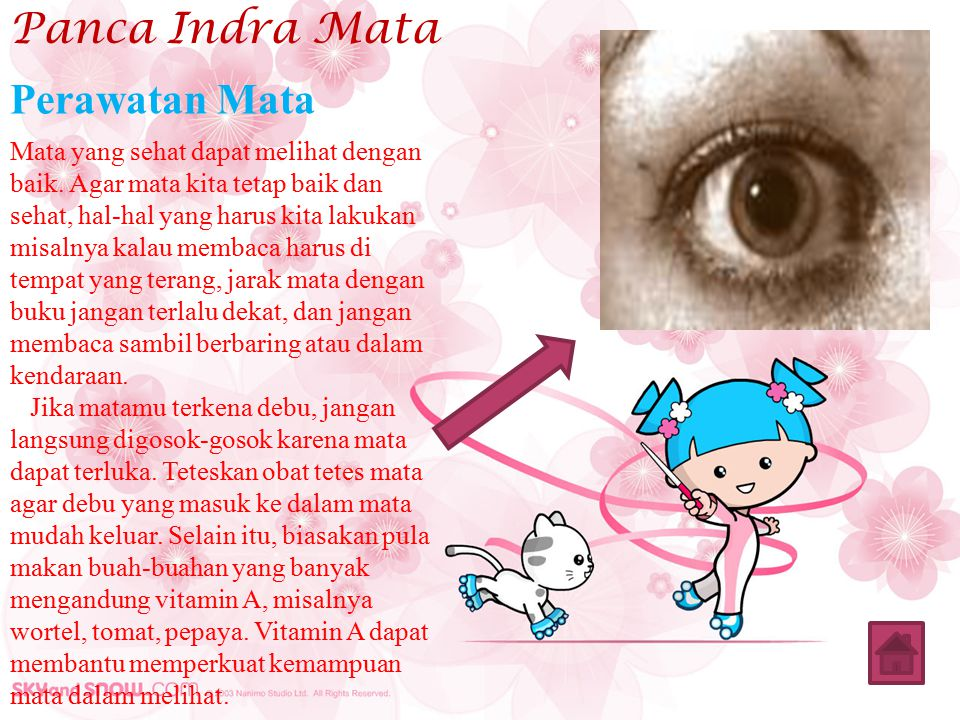 Panca Indra Mata Perawatan Mata