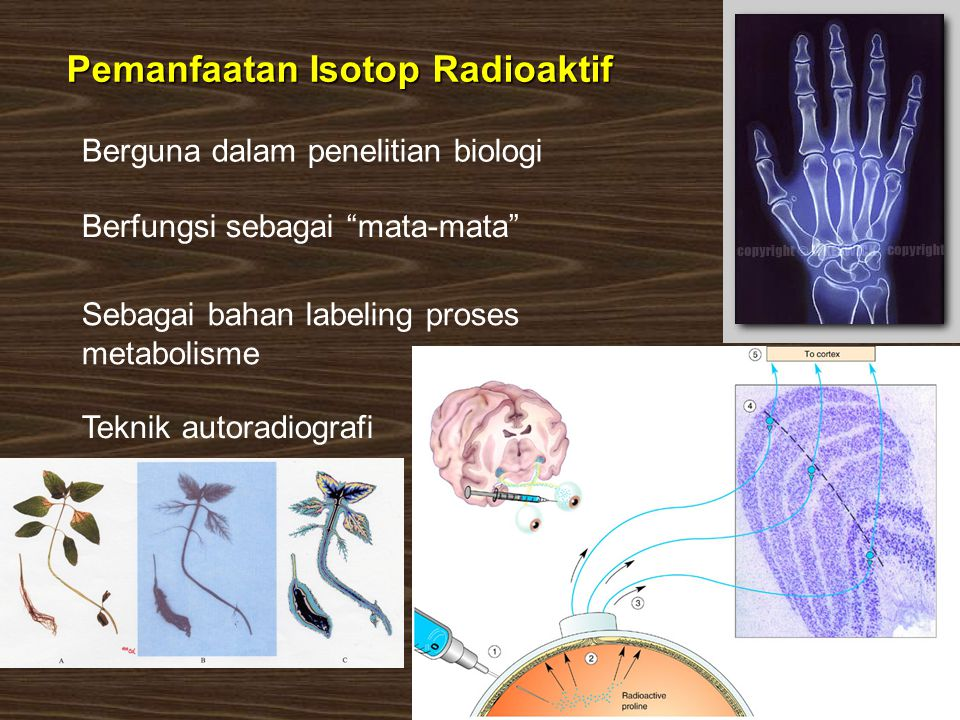Pemanfaatan Isotop Radioaktif