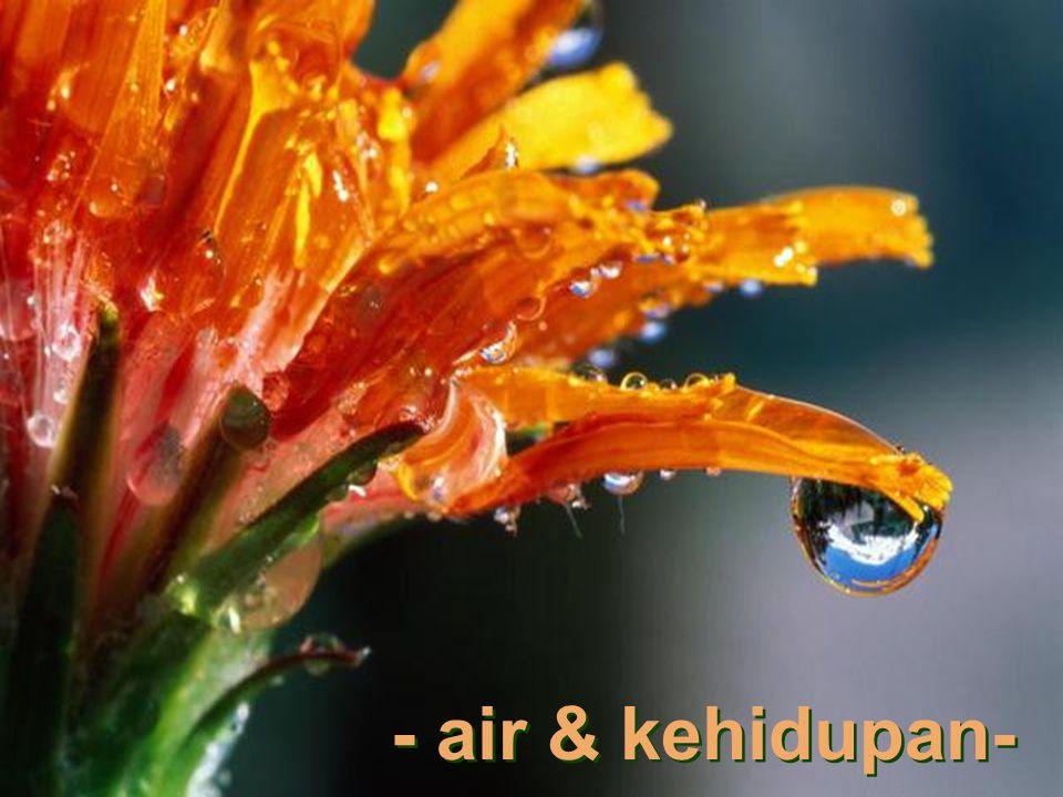 - air & kehidupan-