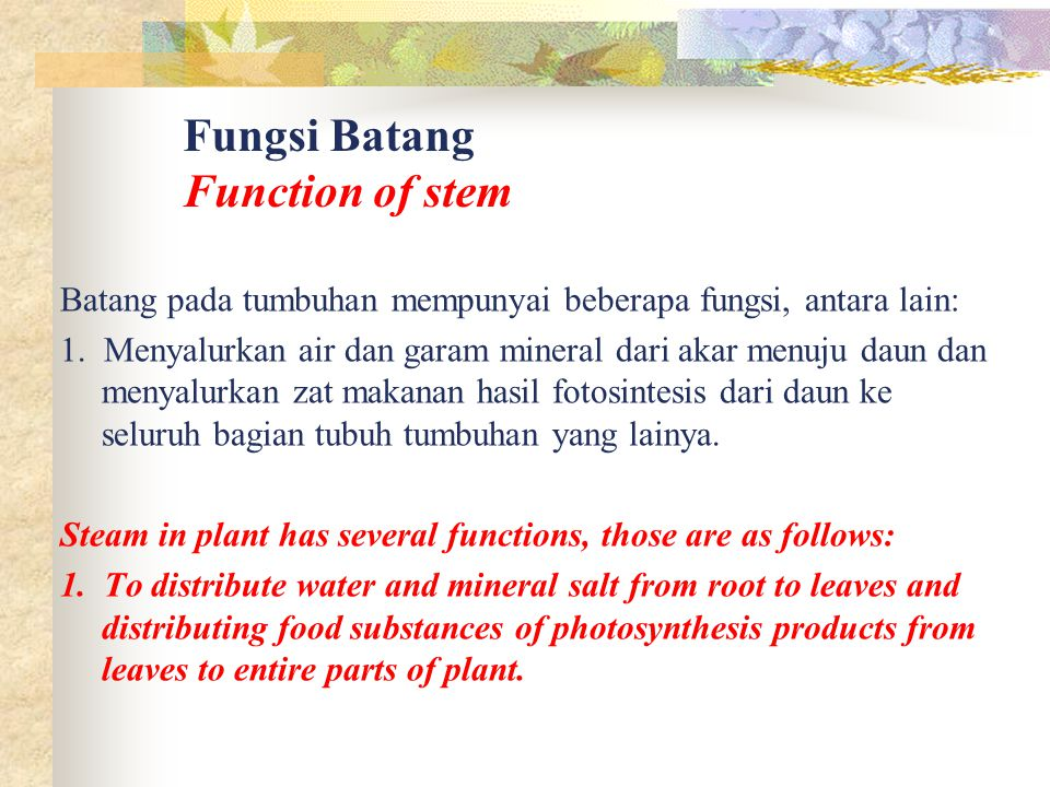 Fungsi Batang Function of stem
