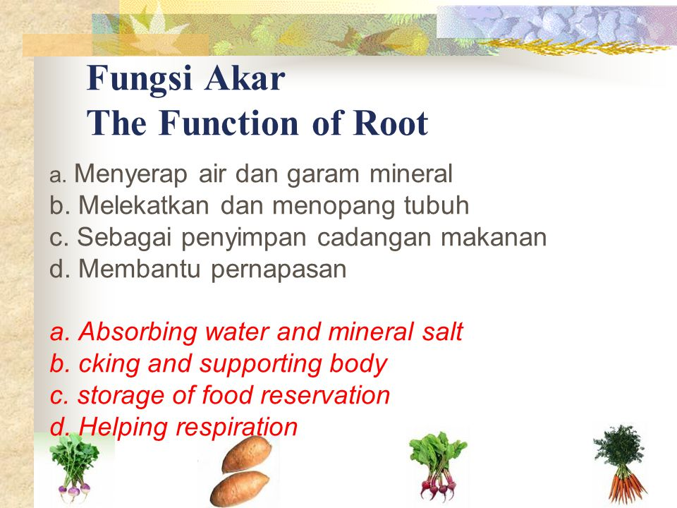 Fungsi Akar The Function of Root
