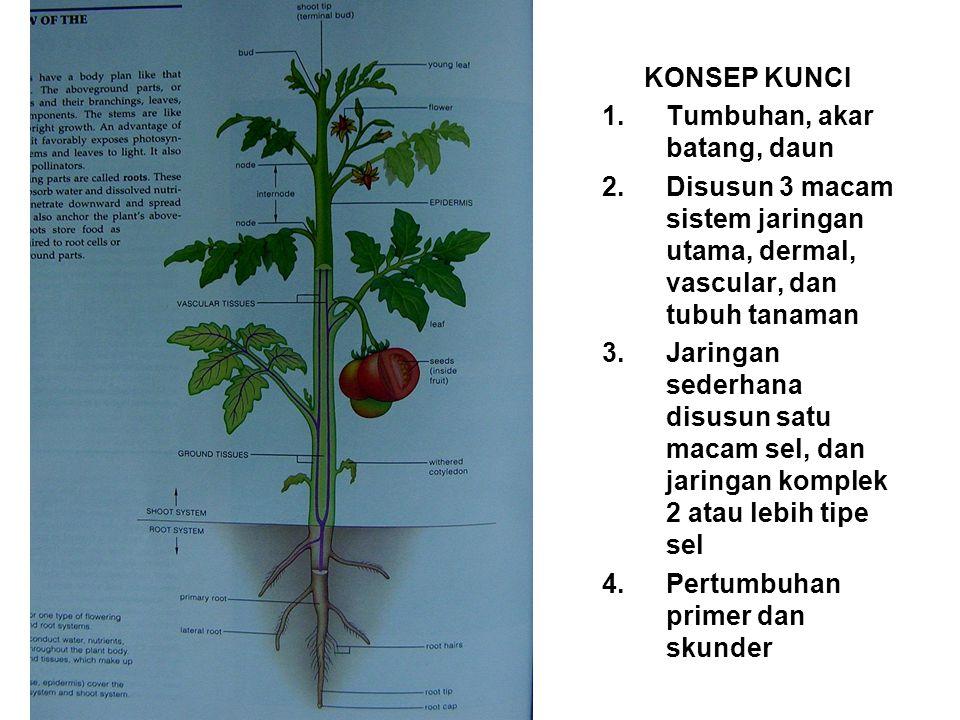 KONSEP KUNCI Tumbuhan, akar batang, daun. Disusun 3 macam sistem jaringan utama, dermal, vascular, dan tubuh tanaman.