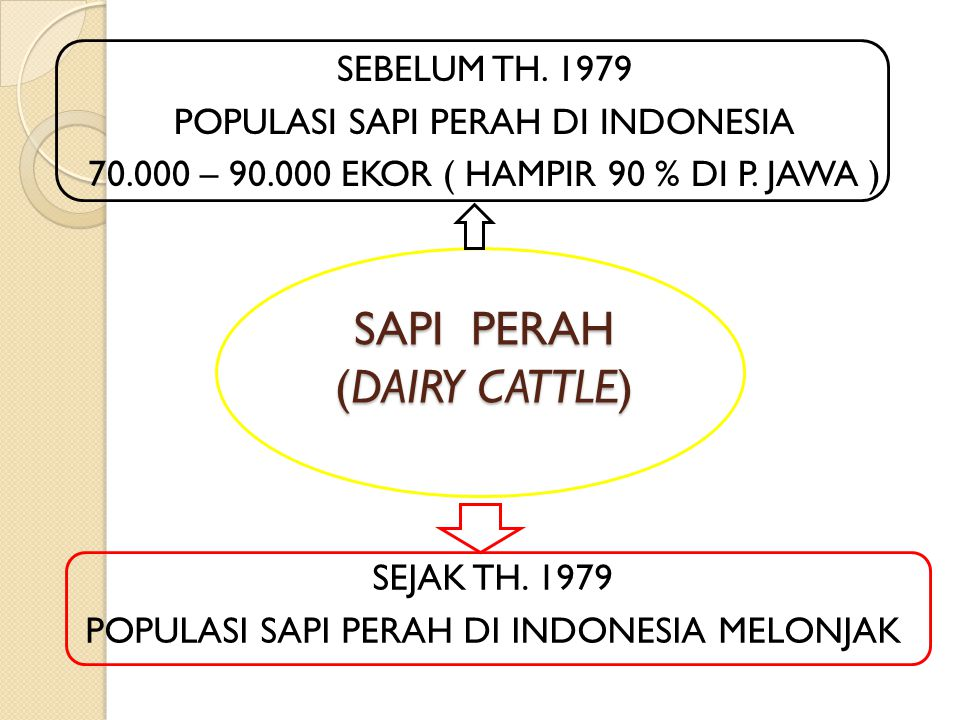 SAPI PERAH (DAIRY CATTLE)