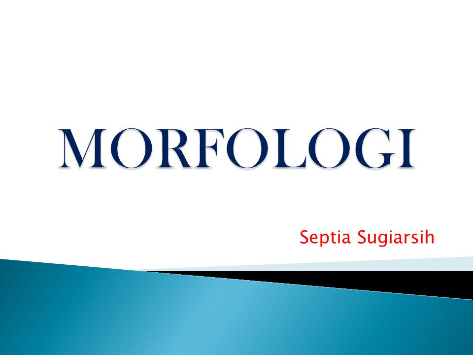 MORFOLOGI Septia Sugiarsih