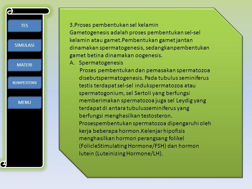 3.Proses pembentukan sel kelamin