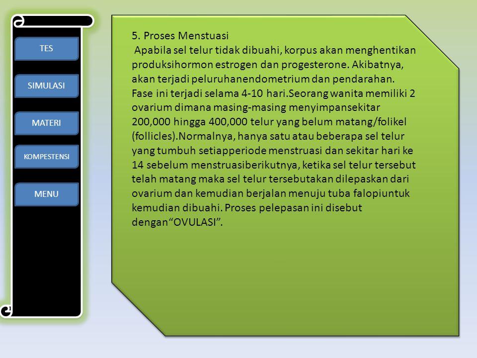 5. Proses Menstuasi