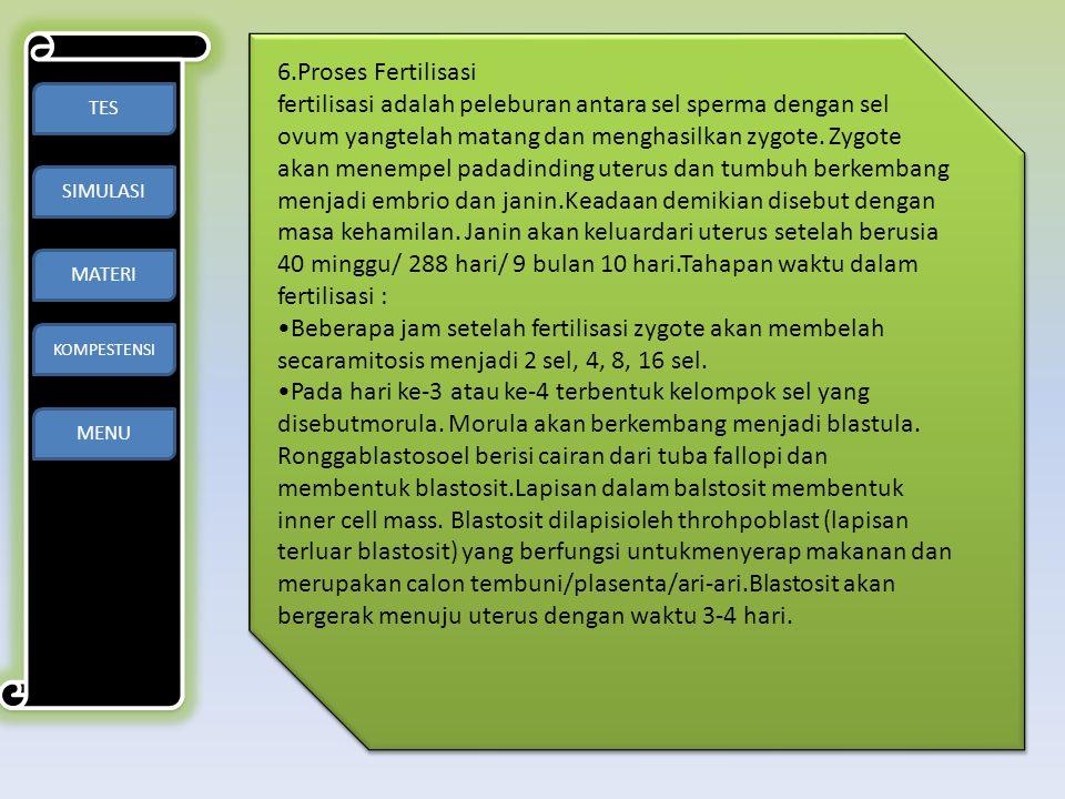 6.Proses Fertilisasi
