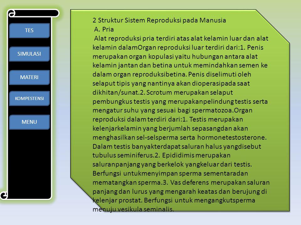 2 Struktur Sistem Reproduksi pada Manusia A. Pria