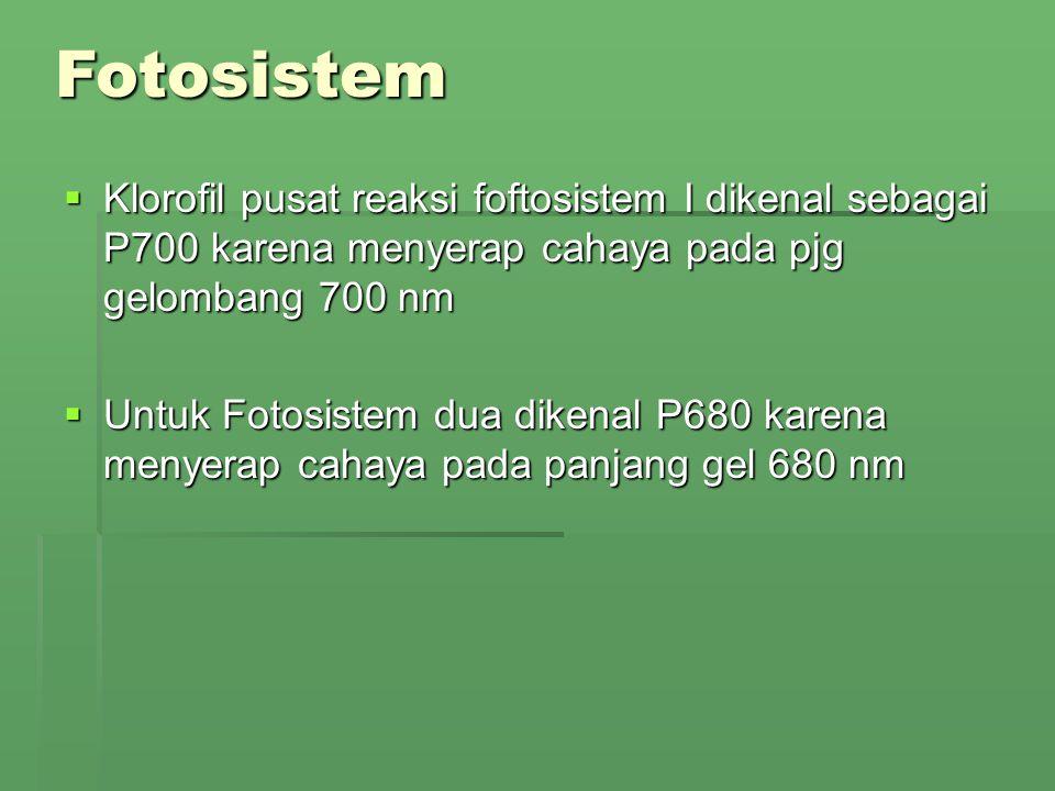 Fotosistem Klorofil pusat reaksi foftosistem I dikenal sebagai P700 karena menyerap cahaya pada pjg gelombang 700 nm.