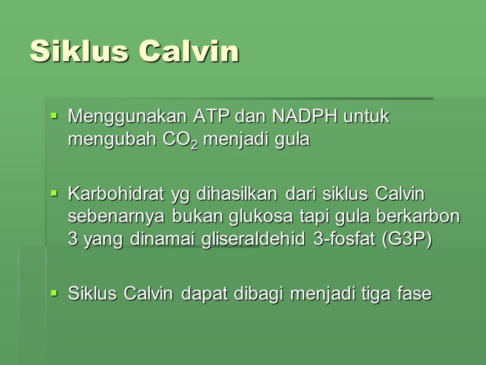 Siklus Calvin Menggunakan ATP dan NADPH untuk mengubah CO2 menjadi gula.