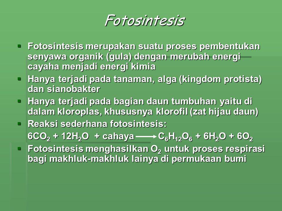Fotosintesis Fotosintesis merupakan suatu proses pembentukan senyawa organik (gula) dengan merubah energi cayaha menjadi energi kimia.