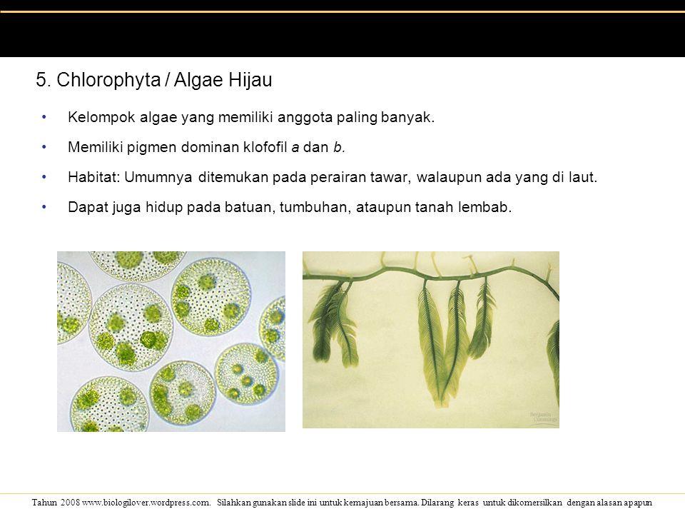 5. Chlorophyta / Algae Hijau