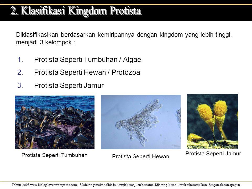 2. Klasifikasi Kingdom Protista