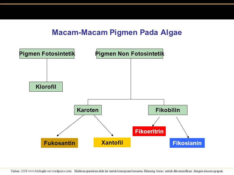 Macam-Macam Pigmen Pada Algae