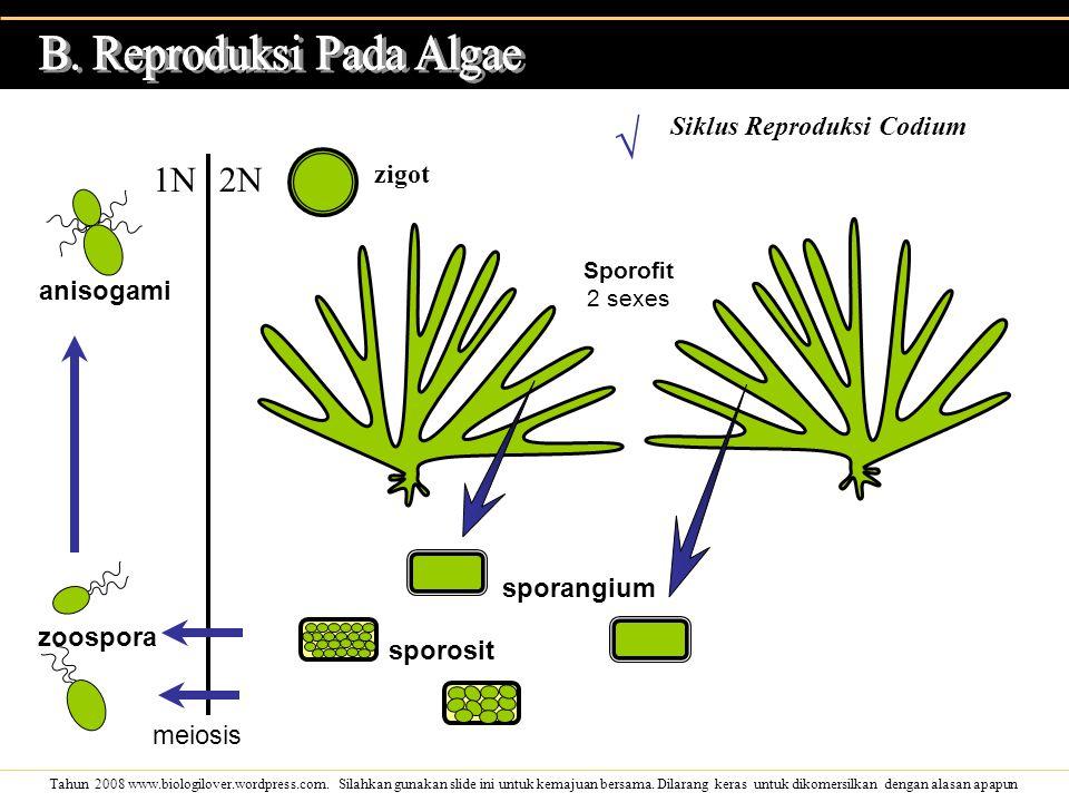 B. Reproduksi Pada Algae