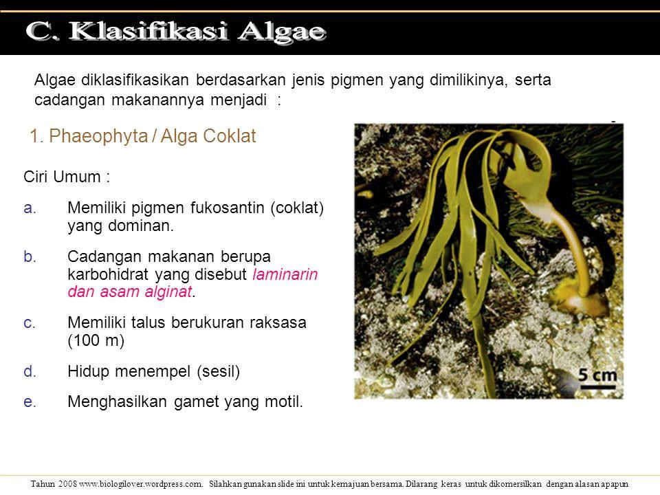 C. Klasifikasi Algae 1. Phaeophyta / Alga Coklat