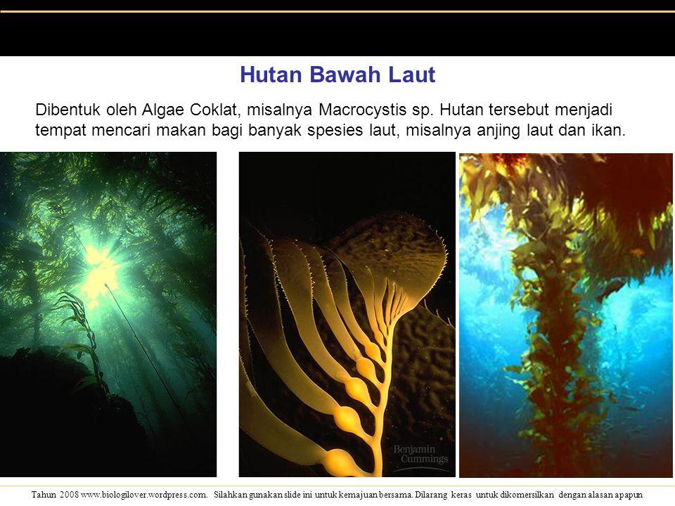 Hutan Bawah Laut
