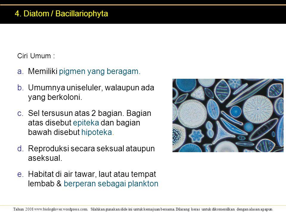 4. Diatom / Bacillariophyta