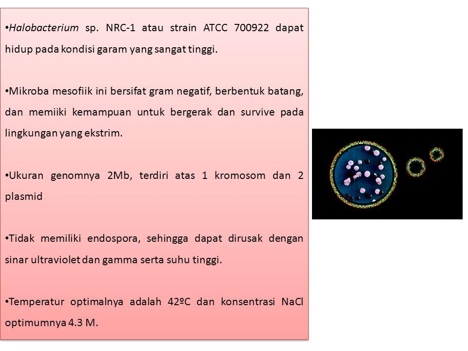 Halobacterium sp. NRC-1 atau strain ATCC 700922 dapat hidup pada kondisi garam yang sangat tinggi.