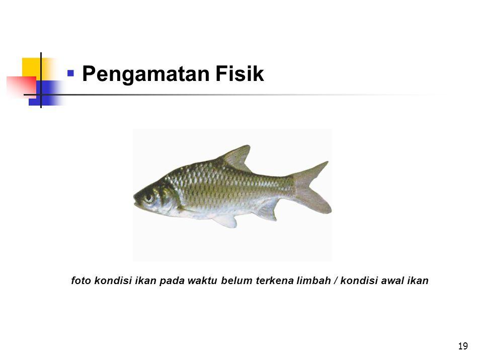 foto kondisi ikan pada waktu belum terkena limbah / kondisi awal ikan