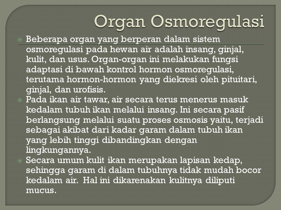 Organ Osmoregulasi