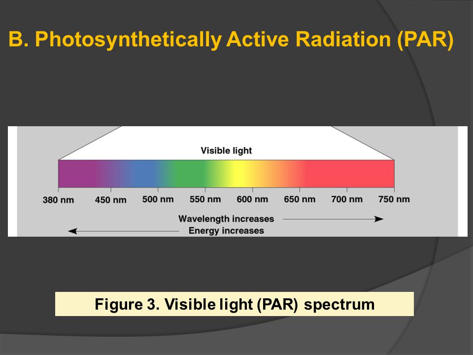Figure 3. Visible light (PAR) spectrum
