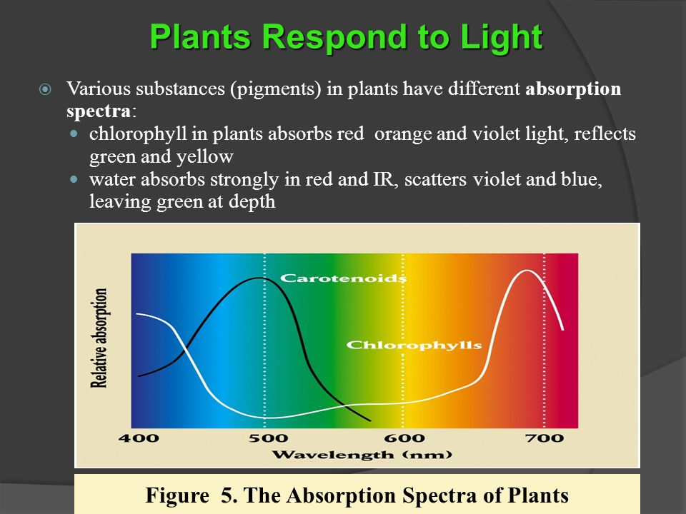 Figure 5. The Absorption Spectra of Plants