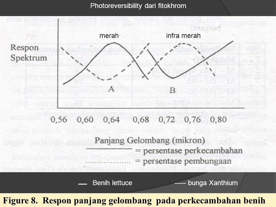 Photoreversibility dari fitokhrom