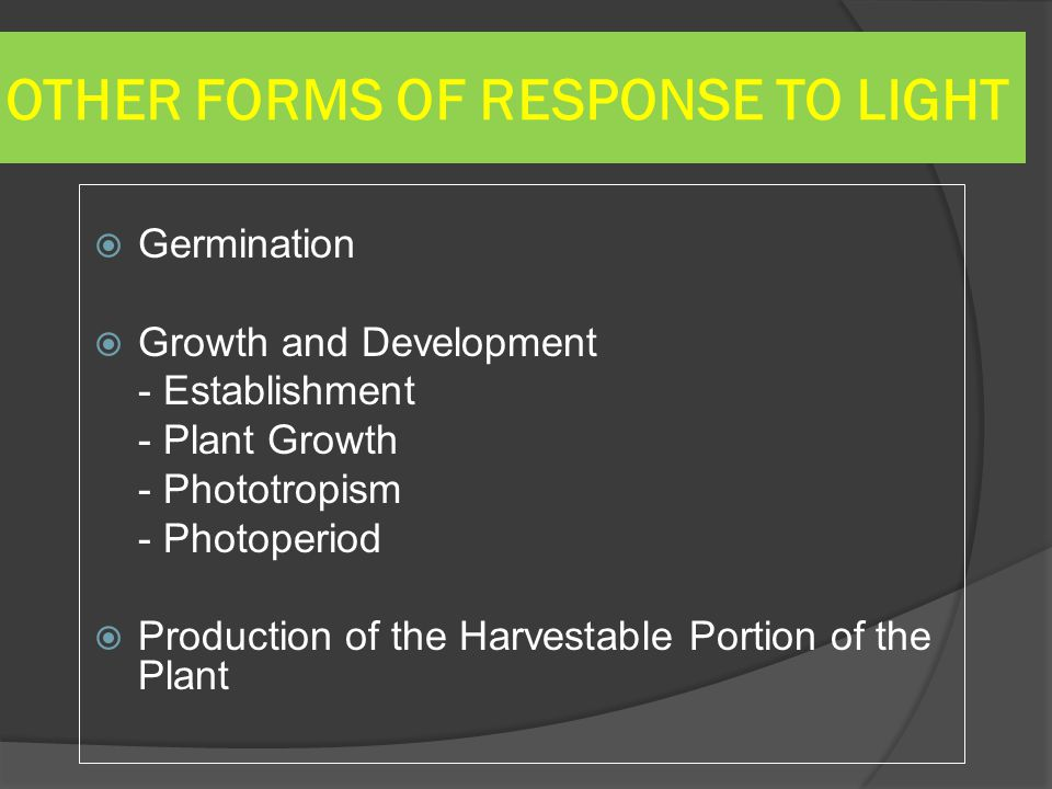 OTHER FORMS OF RESPONSE TO LIGHT
