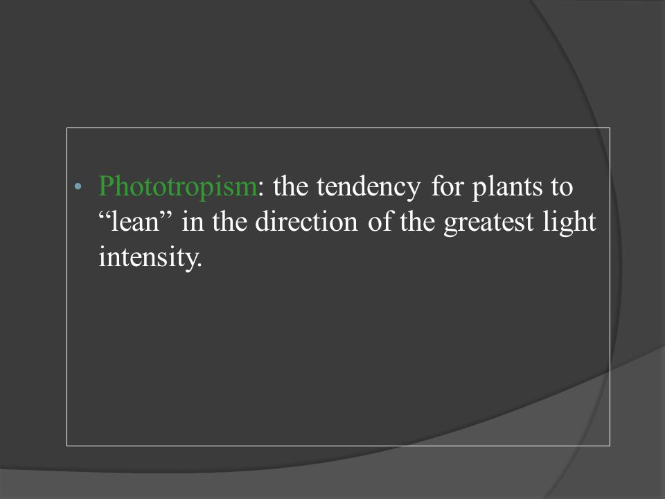 Phototropism: the tendency for plants to lean in the direction of the greatest light intensity.