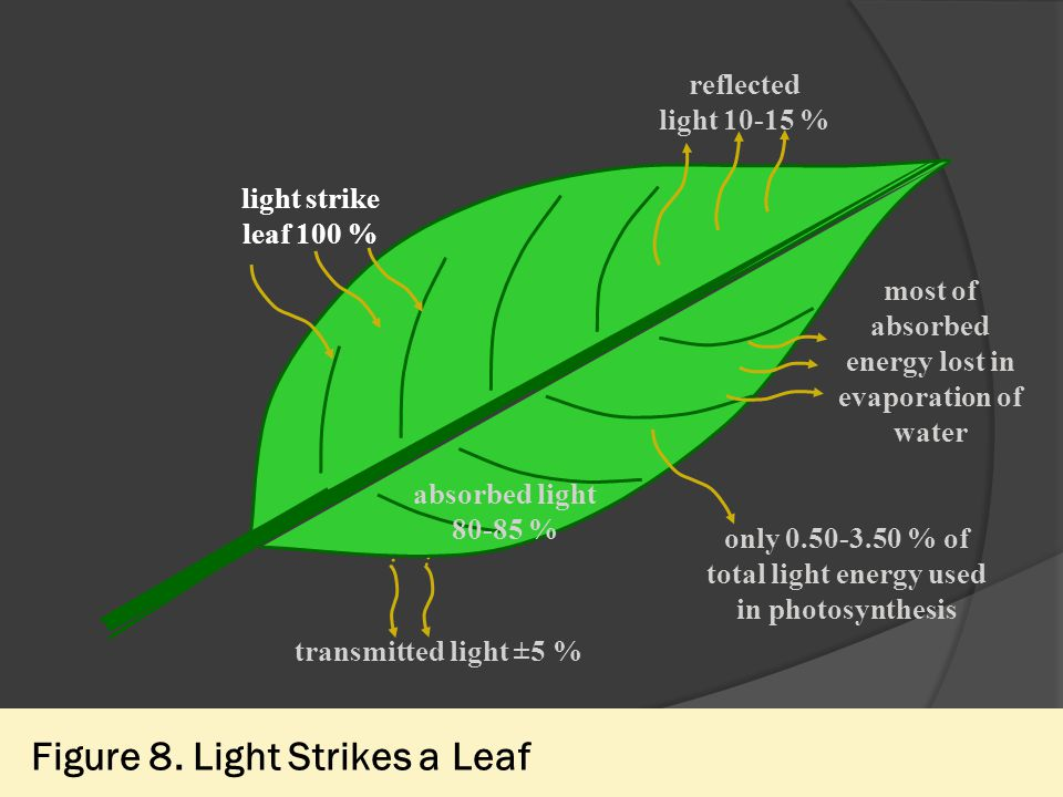 Figure 8. Light Strikes a Leaf