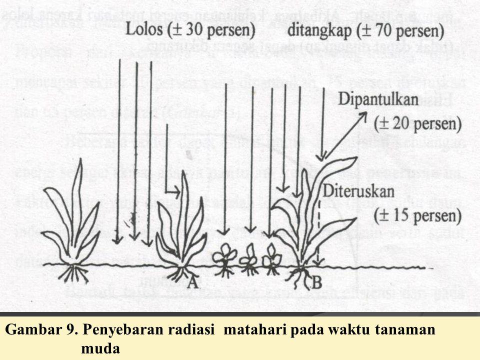 Gambar 9. Penyebaran radiasi matahari pada waktu tanaman