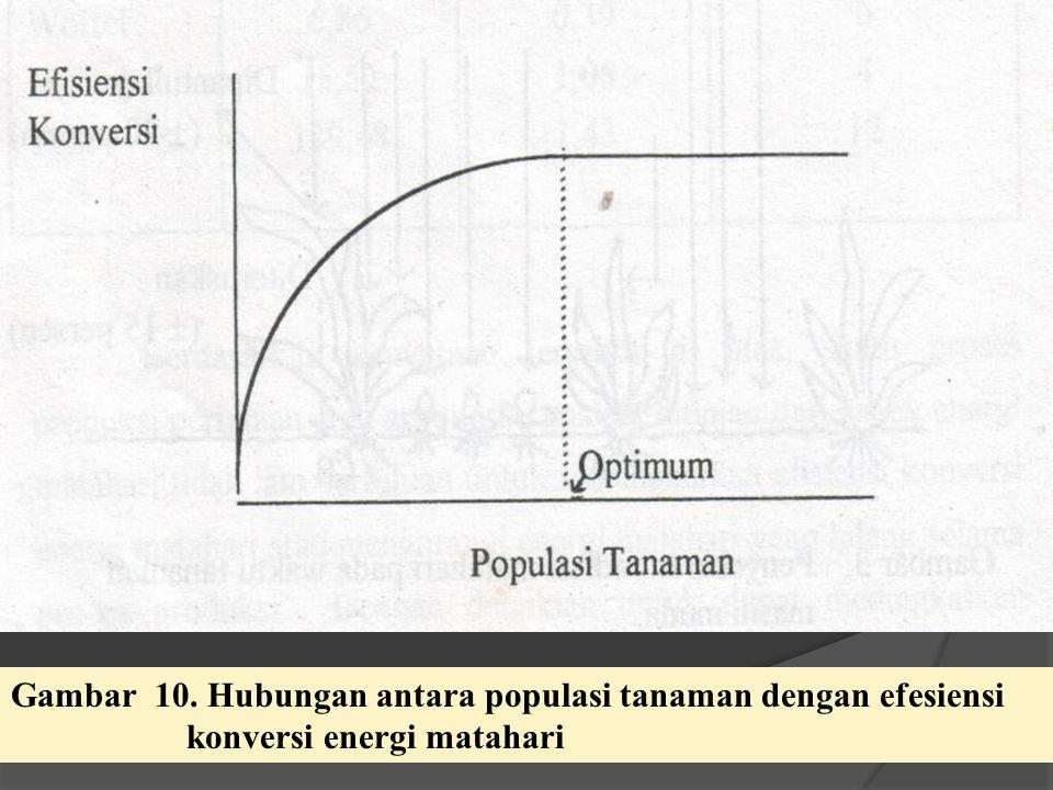 Gambar 10. Hubungan antara populasi tanaman dengan efesiensi