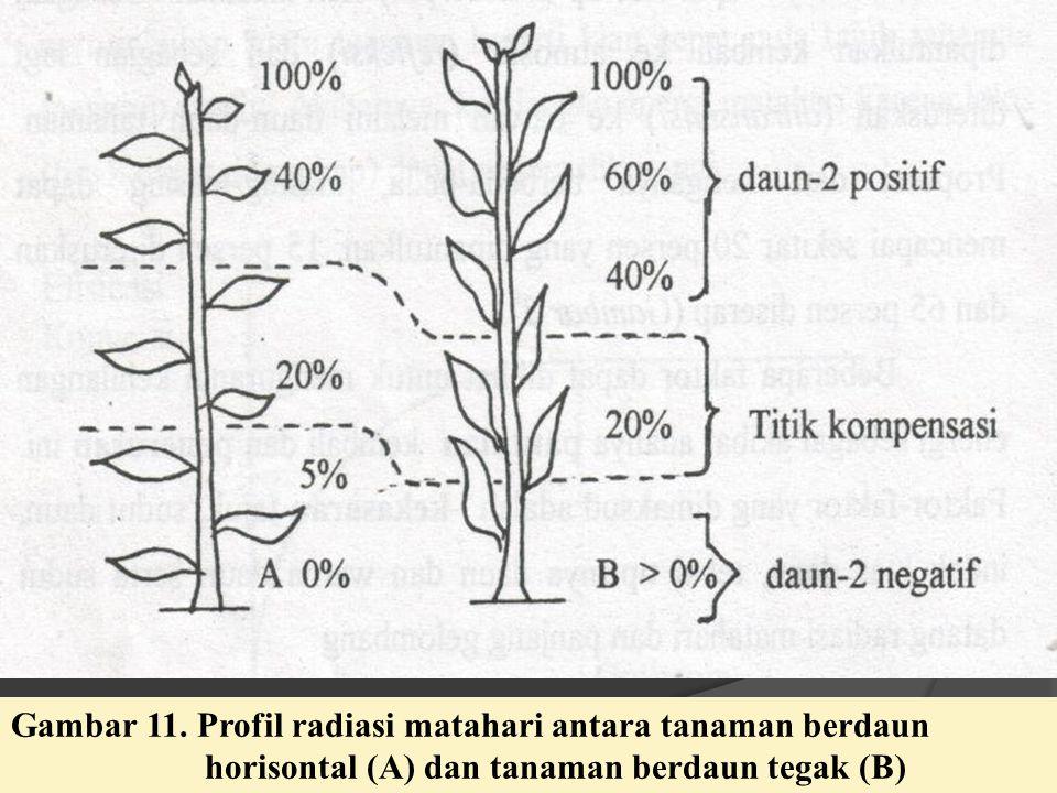Gambar 11. Profil radiasi matahari antara tanaman berdaun