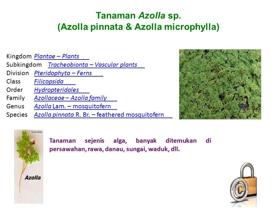 (Azolla pinnata & Azolla microphylla)