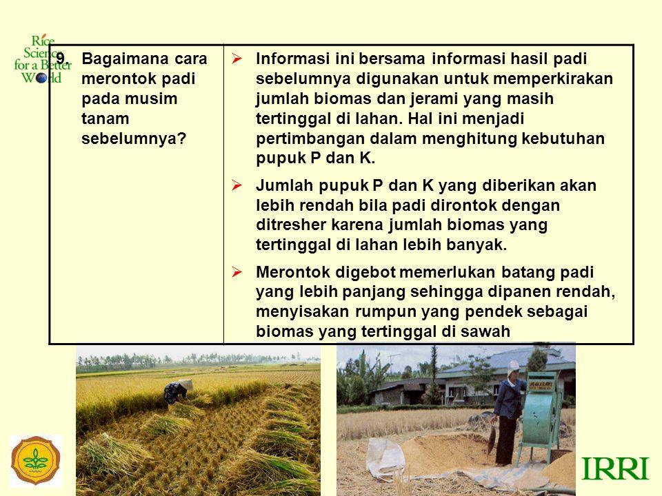 Bagaimana cara merontok padi pada musim tanam sebelumnya