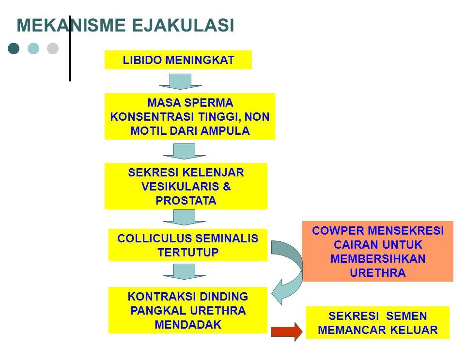 MEKANISME EJAKULASI LIBIDO MENINGKAT
