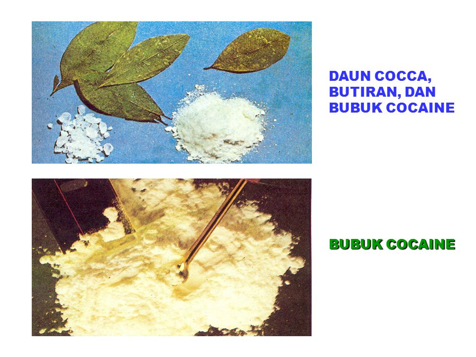 DAUN COCCA, BUTIRAN, DAN BUBUK COCAINE