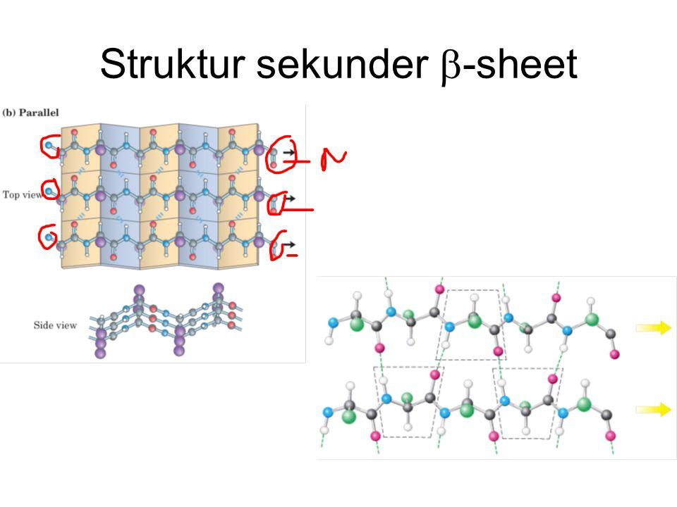 Struktur sekunder b-sheet