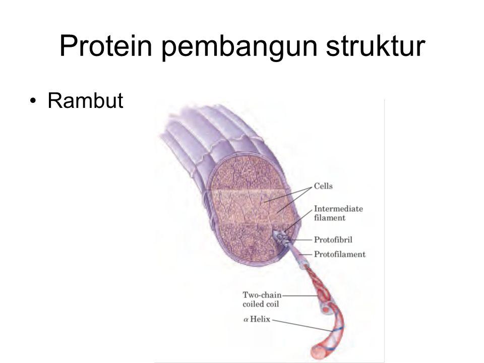 Protein pembangun struktur