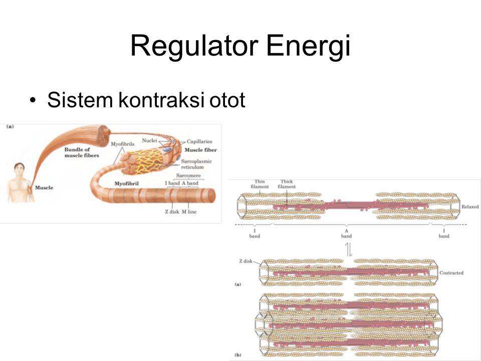 Regulator Energi Sistem kontraksi otot