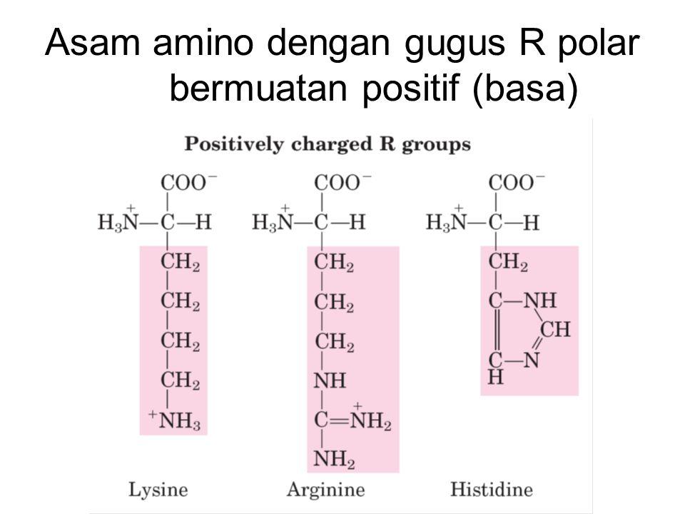Asam amino dengan gugus R polar bermuatan positif (basa)