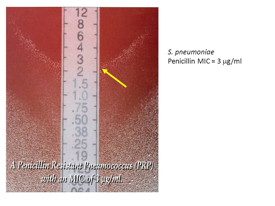 S. pneumoniae Penicillin MIC = 3 g/ml