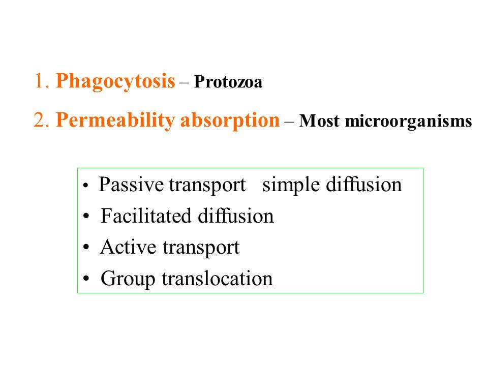 1. Phagocytosis – Protozoa