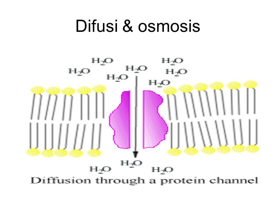 Difusi & osmosis